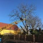 Těžká břemena – odvoz větví stromů